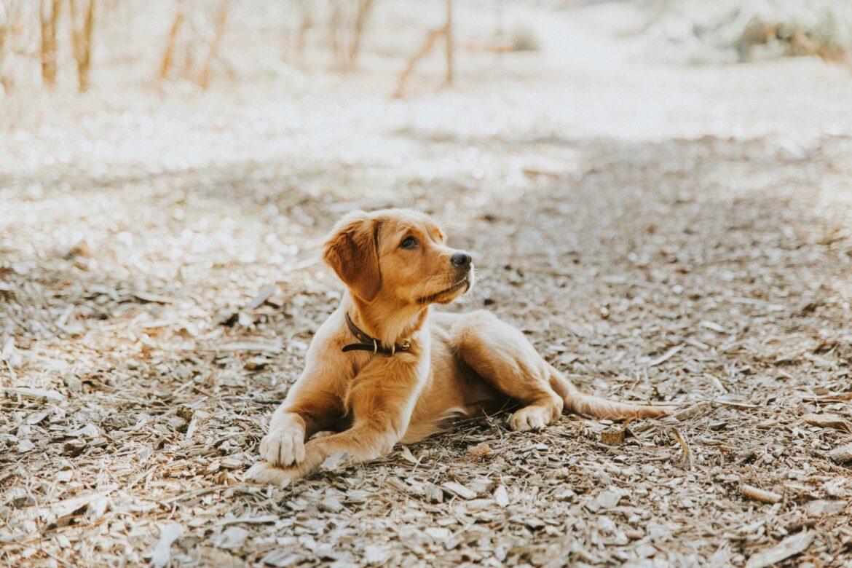 Feiten over een puppy, deel twee